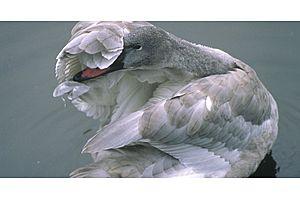 nomura: beware these grey swan risks for 2017