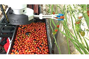 This Robot Can Pick Tomatoes Better Than Humans